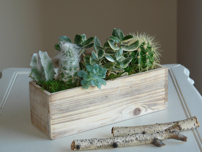 Wood box wood boxes woodland succulents planter flower pot for Wooden cactus planter