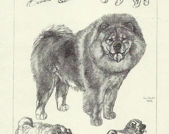 Chow Chow dog Print by Vere Temple 1935