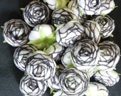 35+ White and Black Silk Rose Flower Heads for Crafts, Weddings, Centerpieces, Favors and much more
