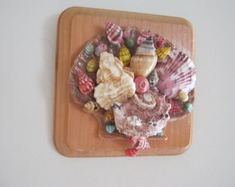 Seashell Wall Hanging Multi Color Sea Shell Wall Art Wall Decor Ocean Decor Beach Decor Gift Idea OOAK
