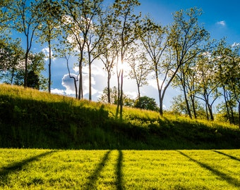 Sun shining through trees at Antietam National Battlefield, Maryland  - Landscape Photography Fine Art Print or Wrapped Canvas