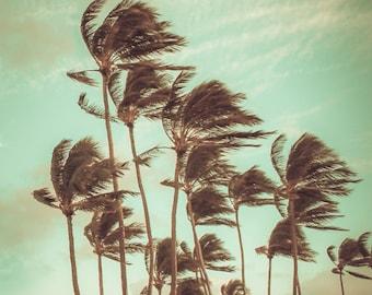 "Palm Trees, Surf Decor, Hawaiian Art, Beach Photography, Fine Art Print, Sunset, Aqua, Mint, Oahu, Cottage Chic, Nautical Decor - ""Breezy"""