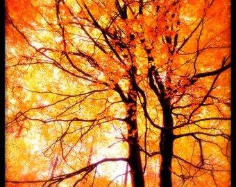 Greeting Card, Modern Vintage, Autumn Leaves,Trees, Ttv, Retro, Blank.