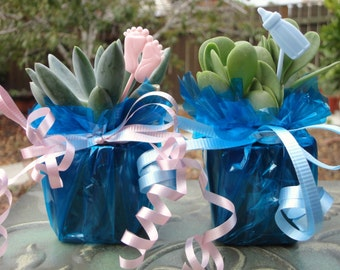 20 Mini Succulent Plant Party Favor Baby Shower Blue