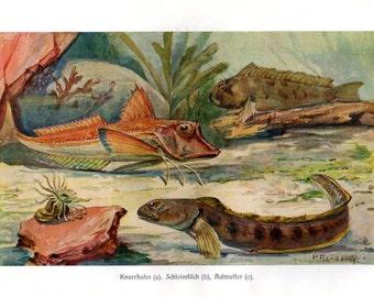 1914 Antique Fish Print Lithograph Marine Life Nautical Art