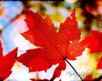 Artistic Autumn Photograph That Can Be Personalized