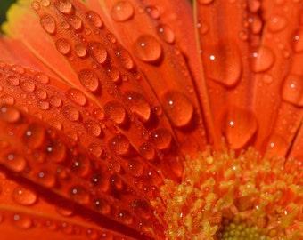 Orange Rain Petals Fine Art Print