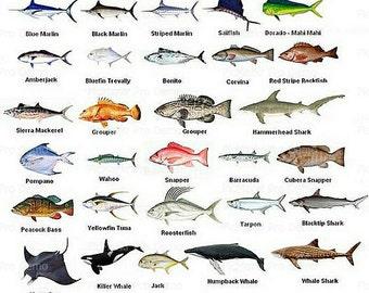Types of edible fish for Edible hawaiian fish