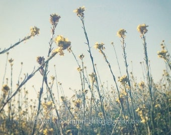 "Flower Photo Art, Yellow, Blue floral art, Flower Field, Rise & Shine Dreamy Floral Photo, Digital Download Photo, Printable 5x7"" JPEG file"