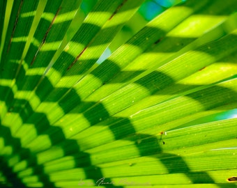 Palm leaf - Photography