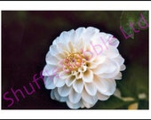 Flower Photograph Blank A5 Greetings Card