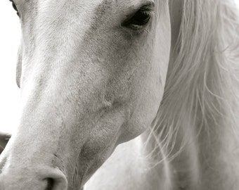 White Horse - Large Print 18X26, Digital Photography, Horse Photography, Horse Art, Horse Decor, Neutral Horse Art, Arabian, White Horse Art