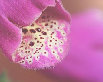 Dalmatian Purple Foxglove Color Photo Print { spots, sunlight, flower, fuchsia, bud, wall art, macro, nature & fine art photography }