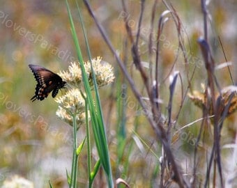Swallowtail Butterfly Photograph // Florida Nature Photography