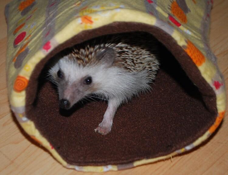 Hedgehog bear critters pattern small pet hedgehog guinea pig for Guinea pig bed pattern