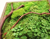 """12"""" x 36"""" Artisan Moss® Moss Wall Art. Plant Painting®- No Care Green Wall Art. Real Preserved Plants, Reclaimed Wood. Moss and Fern Art."""