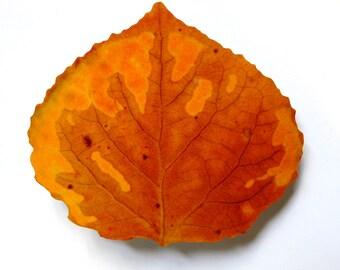 Brown & Orange Aspen Leaf Barrette