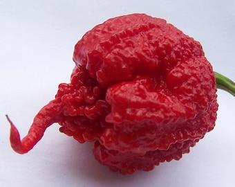 "Carolina Reaper Pepper - 4 Plants/2"" Pots - The Hottest Pepper in the World"