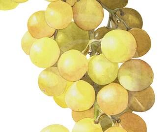 """Golden Grapes Watercolor 9"""" x 12"""" Print"""