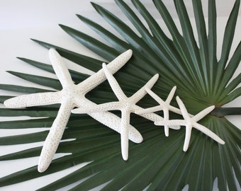 Bleached White Starfish- Bulk or Individual