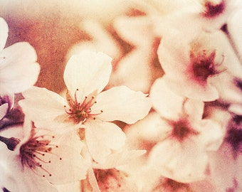Nature Photography - Macro - Cherry Blossoms - Fine Art