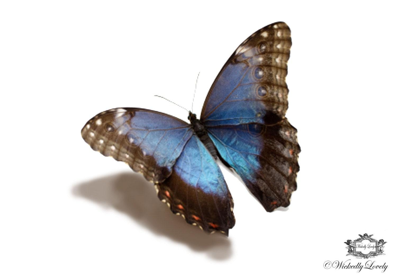 Blue morpho butterfly tattoo - photo#16