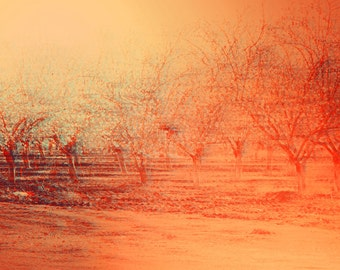 Almond Trees, Nature Photography, Wall Art Print, Landscape Photography, Yellow Orange Peach Photo, Tree Boulevard