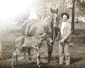 Excellent early 1900's Mare & Colt Horse Ranch cowboy cabinet photo