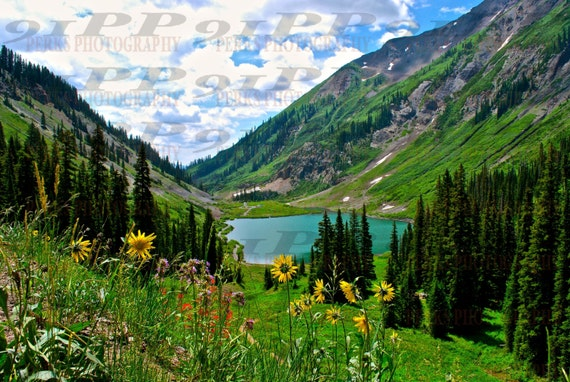 Emerald lake crested butte colorado wildflowers canvas for Crested butte fishing