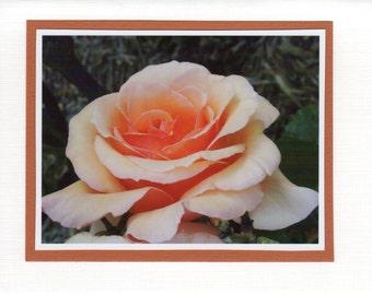 Peach Rose Photo Card