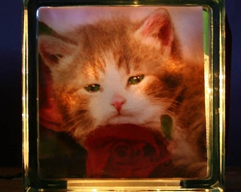 "Glass Photo Light Box of Grey Kitten ""Repose On A Rose"""