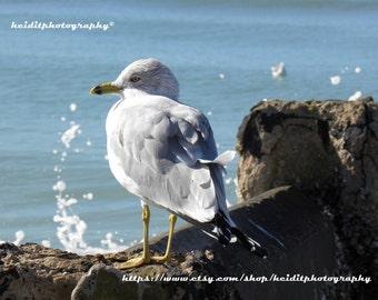 Seawall Seagull~ **Art**Paradise**Unedited**Wall Art* *Office Art**Photography**Print**  **Decor**Design**Photographic Art**  *Seagull Mist*