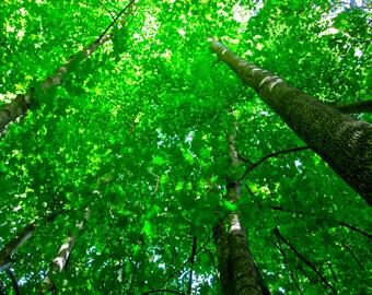 Green Sky Photo Print, 8x10
