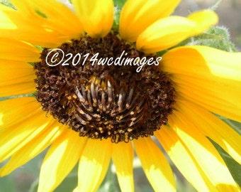 Fine Art Photography Sunflower Spring Digital Home Decor