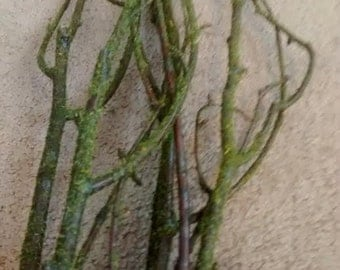 Moss Flecked Birch Tree Branches 3'-4' - Great For Rustic Country Wedding Decorating