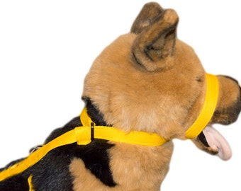 Pet Dog Lead Leash & Head Collar all in one figure of 8 Now comes with Felt nose pad. The RexEzeWalker