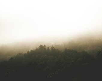 Nature Photography - Misty Forest Photo, 24x36 20x30 16x20 8x10 5x7 fine art wall decor, wall art, black, green and white landscape photo