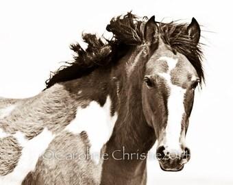 Wild Horse Photo, horse print, horse photo.