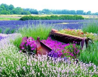 Flower Photography, Lavender Fields, Lavender Photo, Nature Photograph, Floral Landscape, Purple Flowers, Floral Art, Flower, Fine Art Print
