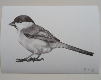 Marsh Tit Illustration Giclee Print, A5