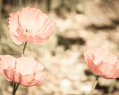 Poppies, Wall Art, Flowers, Poppies, Pink, Orange