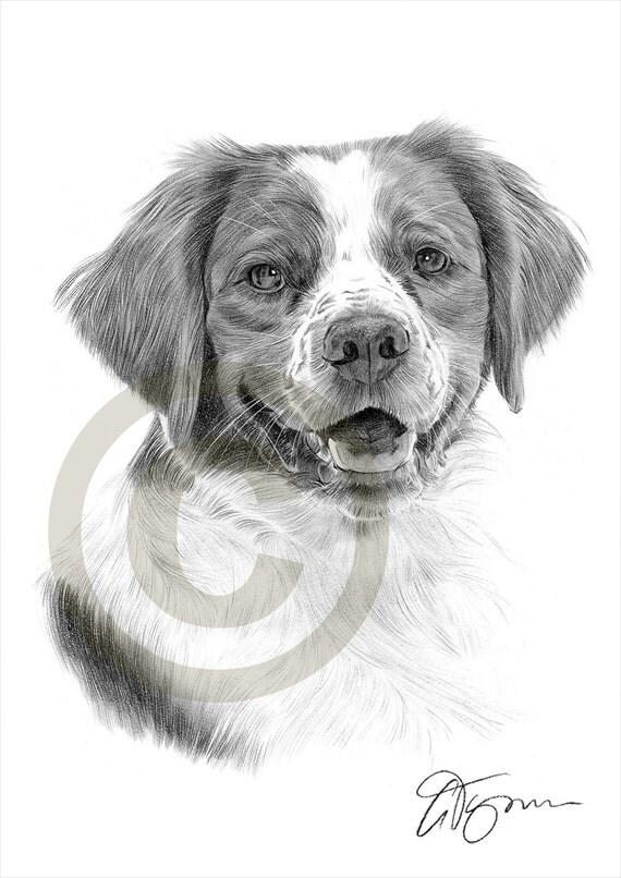 Matita di epagneul breton cane disegno opera di formato a4 for Cane disegno facile