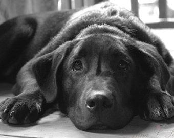 Dog Daze Sanctuary Donation Signed Fine Art Photography Print- black labrador retriever puppy charity photograph- dog wall art- home decor