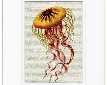 Jellyfish dictionary page print