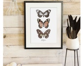 Lepidoptera- Butterfly Scientific Illustration. Beautifully textured cotton canvas art print. Order as an 8x10 11x14 or 16x20 size. Vol.1
