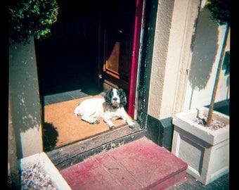 England Cocker Spaniel Dog Photography, Cute Animal Print, Holga Film Photograph, English Pub