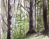 Nature Art Vermont Woods Watercolor Landscape Painting Trees Woodland Forest Original