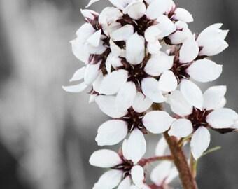 Pale bloom...Alaskan Fine Art Photography