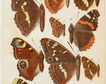 1890 Antique BUTTERFLY print, brown orange butterflies, diurnal