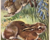1940s woodland Rabbits print, antique Rabbit print, farmyard decor, nursery decor rabbit